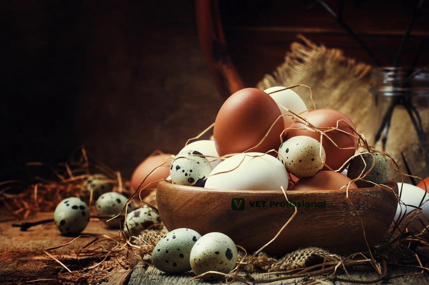 Ovos: além de gerar uma nova vida, é um alimento de grande valor nutricional