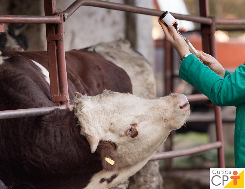 Doenças crônicas: abordagem epidemiológica na medicina veterinária   Artigos CPT