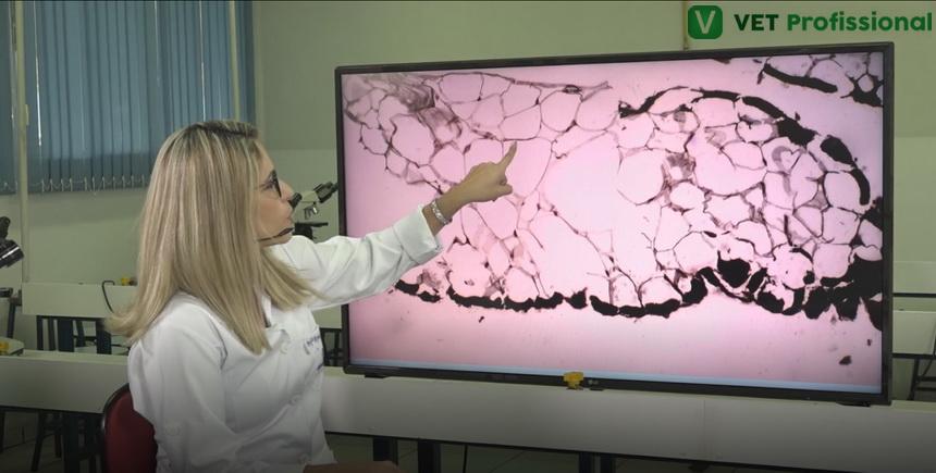 Tecido conjuntivo adiposo em animais: conheça as características desse tecido