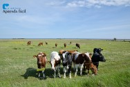 Quais cuidados são importantes na criação de bezerras leiteiras?