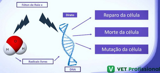 Efeitos da radiação ionizante no DNA.