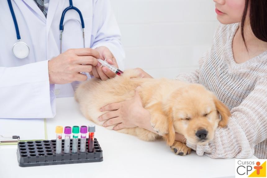 Faz veterinária? Entenda agora o processo dinâmico da Hemostasia   Artigos CPT