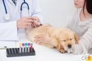 Faz veterinária? Entenda agora o processo dinâmico da Hemostasia