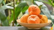 Quais as principais orientações para plantar tangerina?