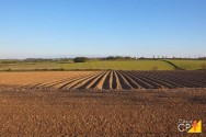 Como usar o fosfato natural e qual a sua função para as plantas?