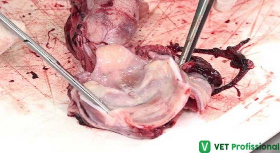 Avaliação do início da traqueia, glote e epiglote.