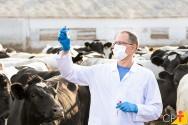 Quais são as doenças reprodutivas mais comuns em bovinos?