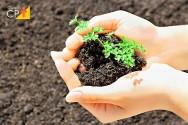 Como recuperar ou restaurar áreas degradadas?