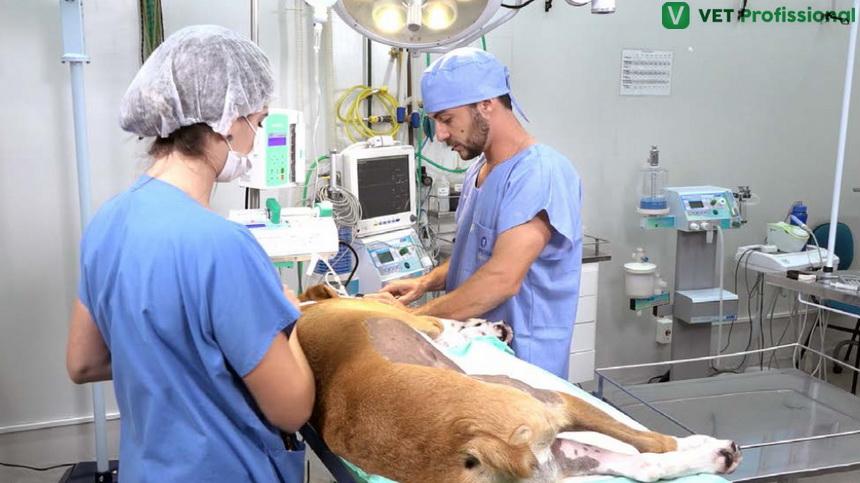 Sr. Veterinário: o que é cirurgia de nodulectomia?