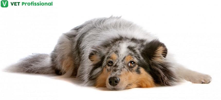 Urolitíase em animais domésticos: o que é e como diagnosticar?