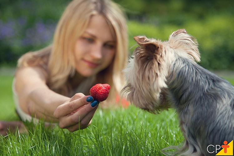 Cão comendo fruta - imagem ilustrativa