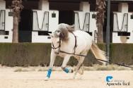 Como garantir um bom condicionamento físico ao meu cavalo?
