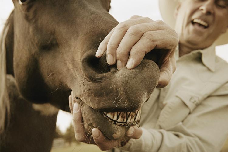 Dentes do cavalo - imagem ilustrativa