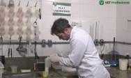 Acidez do leite: quais fatores podem interferir na acidez?