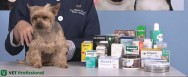 Interação medicamentosa na veterinária: entenda como ocorre esse evento