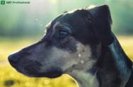Estrutura óssea da cabeça de cães e gatos: vamos conhecer?