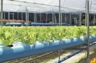 Hidroponia: o que preciso saber para utilizar estufas no cultivo?