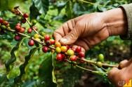 De qual forma posso controlar as principais pragas do café?