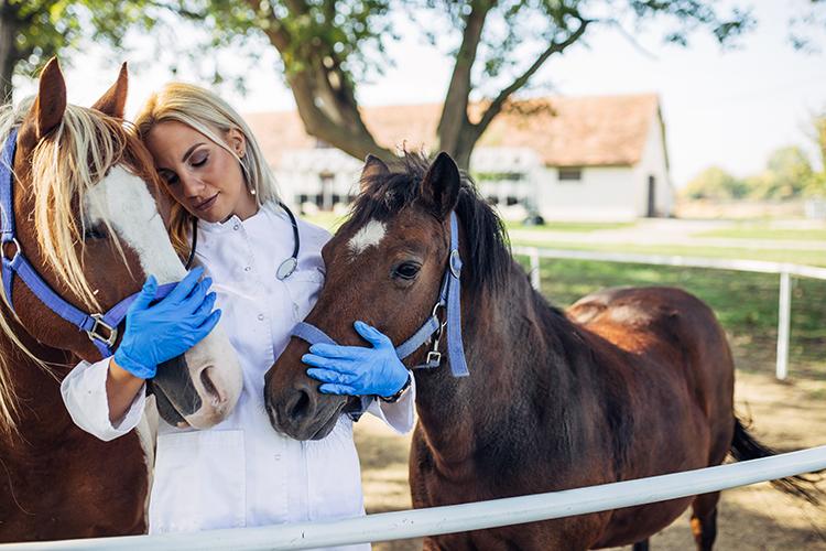 Lidando com cavalo - imagem ilustrativa