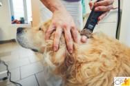 Citologia da pele em cães e gatos. O que saber sobre o assunto?