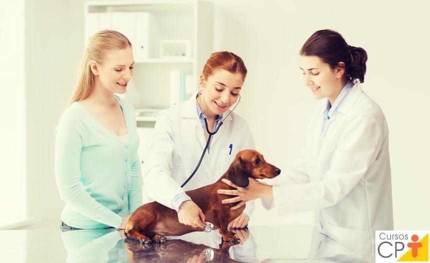 Veterinário, responda: o que é cardiomiopatia dilatada em cães e gatos?   Artigos CPT