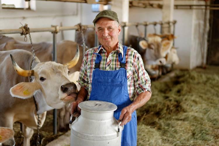 Quer melhorar a qualidade do leite da fazenda? Confira as dicas