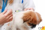 Como deve ser feita a aplicação de injeções em cães?