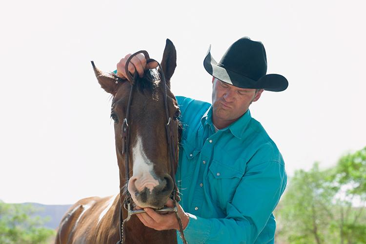 Cavalo e equipamentos - imagem meramente ilustrativa