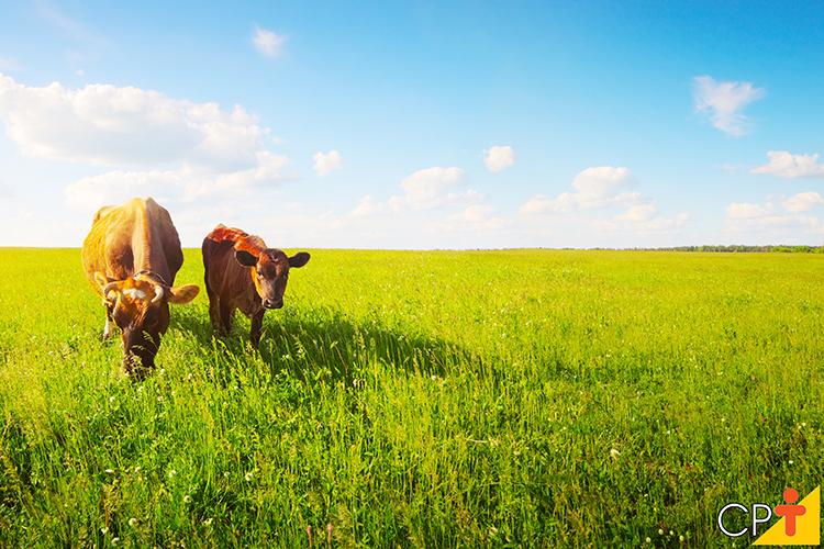 Vacas no pasto - imagem meramente ilustrativa