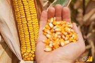 Quais os caminhos para exportação de grãos?