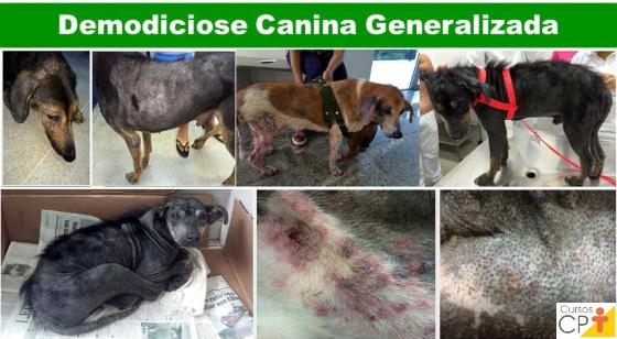 Animais acometidos de demodiciose canina generalizada Artigos CPT