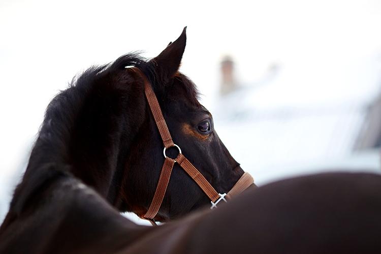 Cavalo - imagem meramente ilustrativa