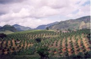 Com a estabilização da economia e a retomada da atividade agrícola, nos últimos três anos, um milhão de trabalhadores retornaram ao campo.