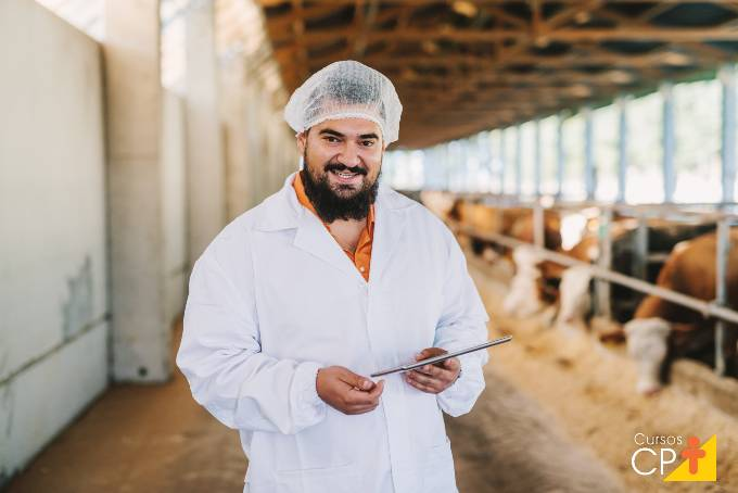 Quais os principais suplementos para gado de corte?