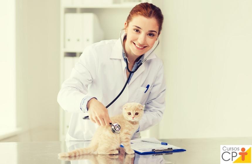 Cardiomiopatia hipertrófica felina tem cura? Como tratar?   Artigos CPT