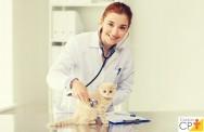 Cardiomiopatia hipertrófica felina tem cura? Como tratar?