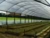 Cultivo em estufas auxilia no melhor desenvolvimento das plantas