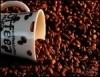 As vantagens de se plantar café