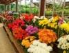 Floricultura é mercado que movimenta bilhões