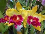 O cultivo de orquídeas trata-se de uma atividade rentável, propícia para pequenas áreas, que utiliza um sistema simples e pouco investimento.