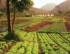 Venda de alimentos orgânicos cresce e eles ficam mais baratos