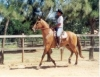 Cavalos de marcha