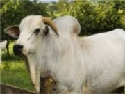 Exposição agropecuária conta com participação recorde de animais