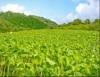 O uso correto de adubos melhora a qualidade nutricional das plantas e dos animais