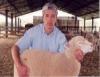 Criadores de ovinos aprendem sobre instalações para melhor manejo