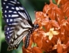 Aprenda a criar borboletas