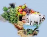O Brasil tornou-se líder mundial na exportação de laranjas, açúcar, café, tabaco, e recentemente, de soja, carne de frango e bovina.