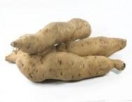 Ração de batata-doce reduz custos na produção de frangos de corte