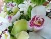 As orquídeas para iniciantes