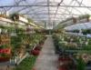 Boas perspectivas para o mercado de flores
